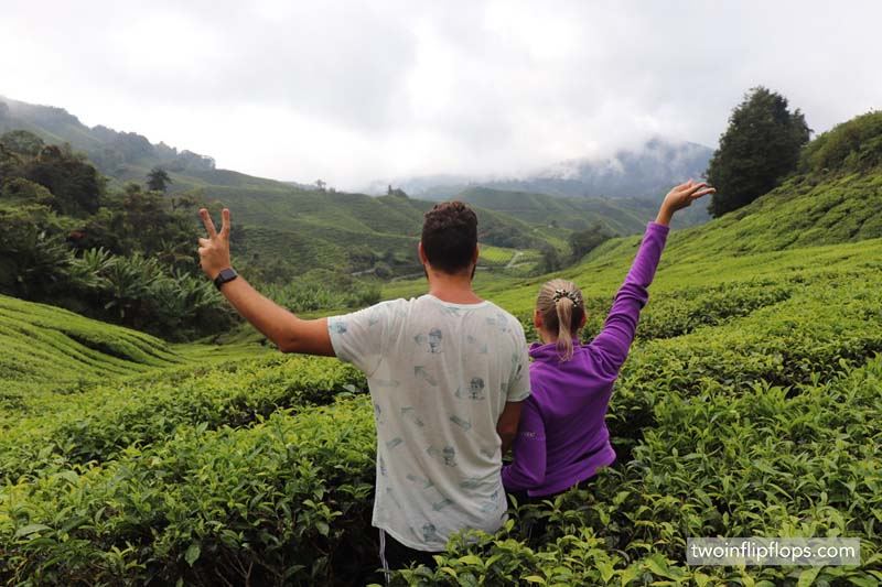 The best ways to explore the Cameron Highlands in Malaysia