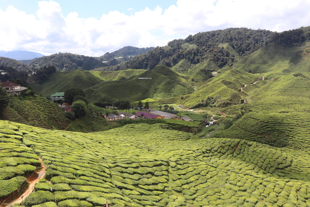 Do's & Dont's when visiting the Cameron Highlands in Malaysia